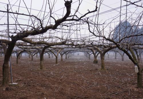 小美玉市の剪定枝